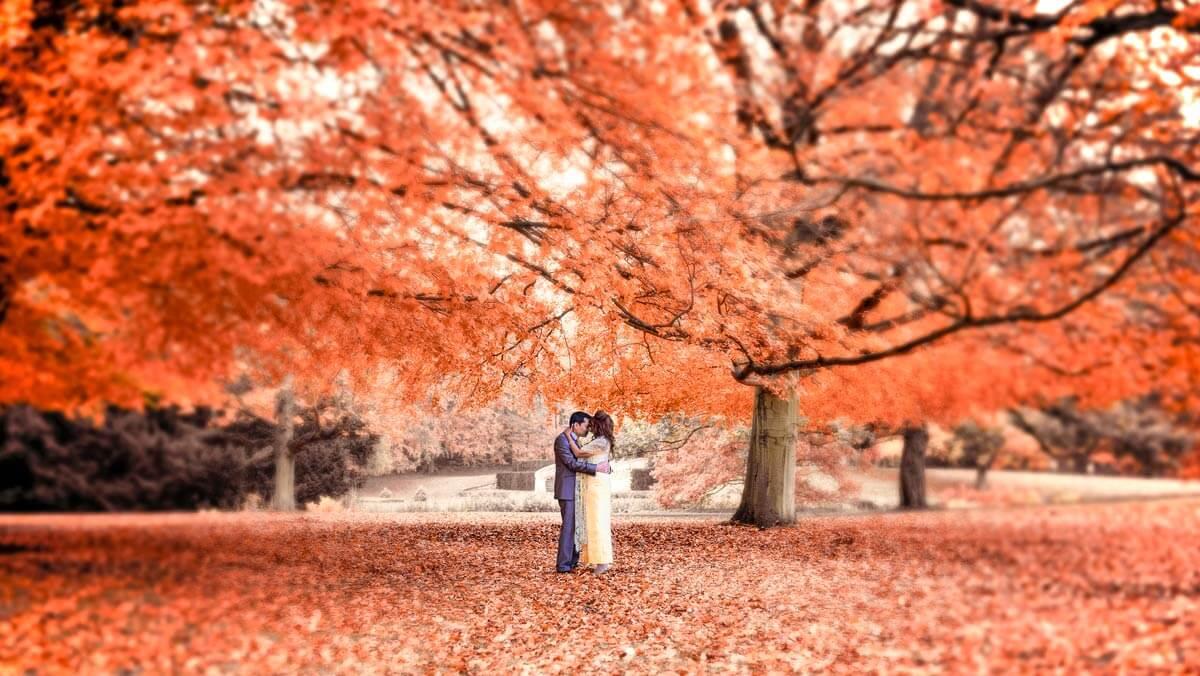 huwelijksaanzoek in het bos, geheim huwelijksaanzoek